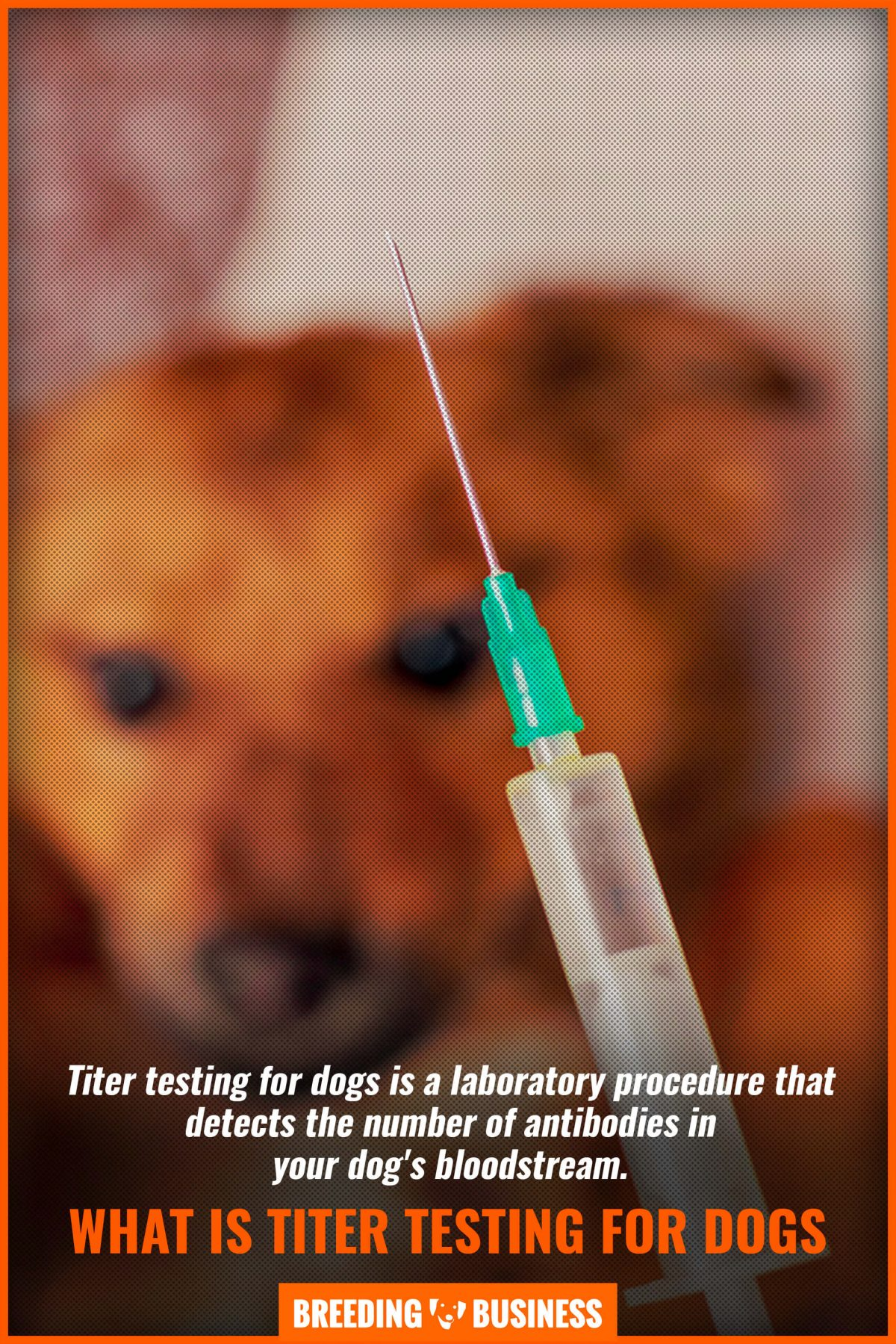 what is titer testing for dogs