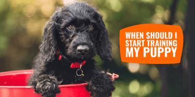 When should you start training a puppy?