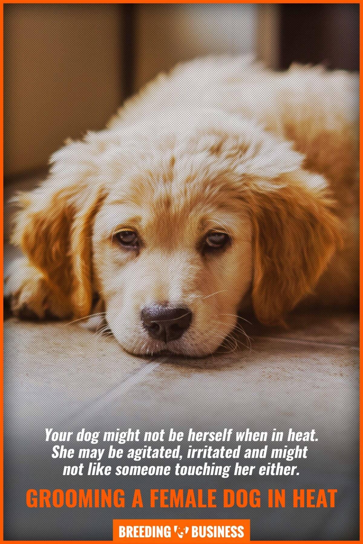 agitated dog in heat
