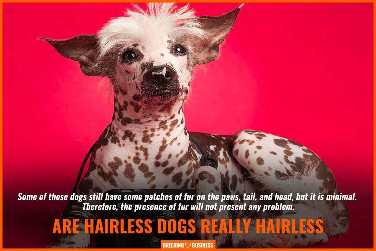 Are hairless dogs really hair-free?