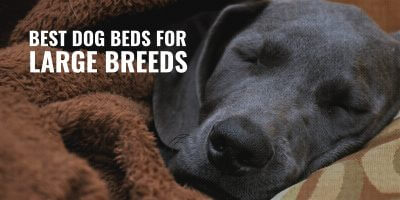 15 Best Dog Beds for Large Breeds – Orthopedic, Breathable & Elevated