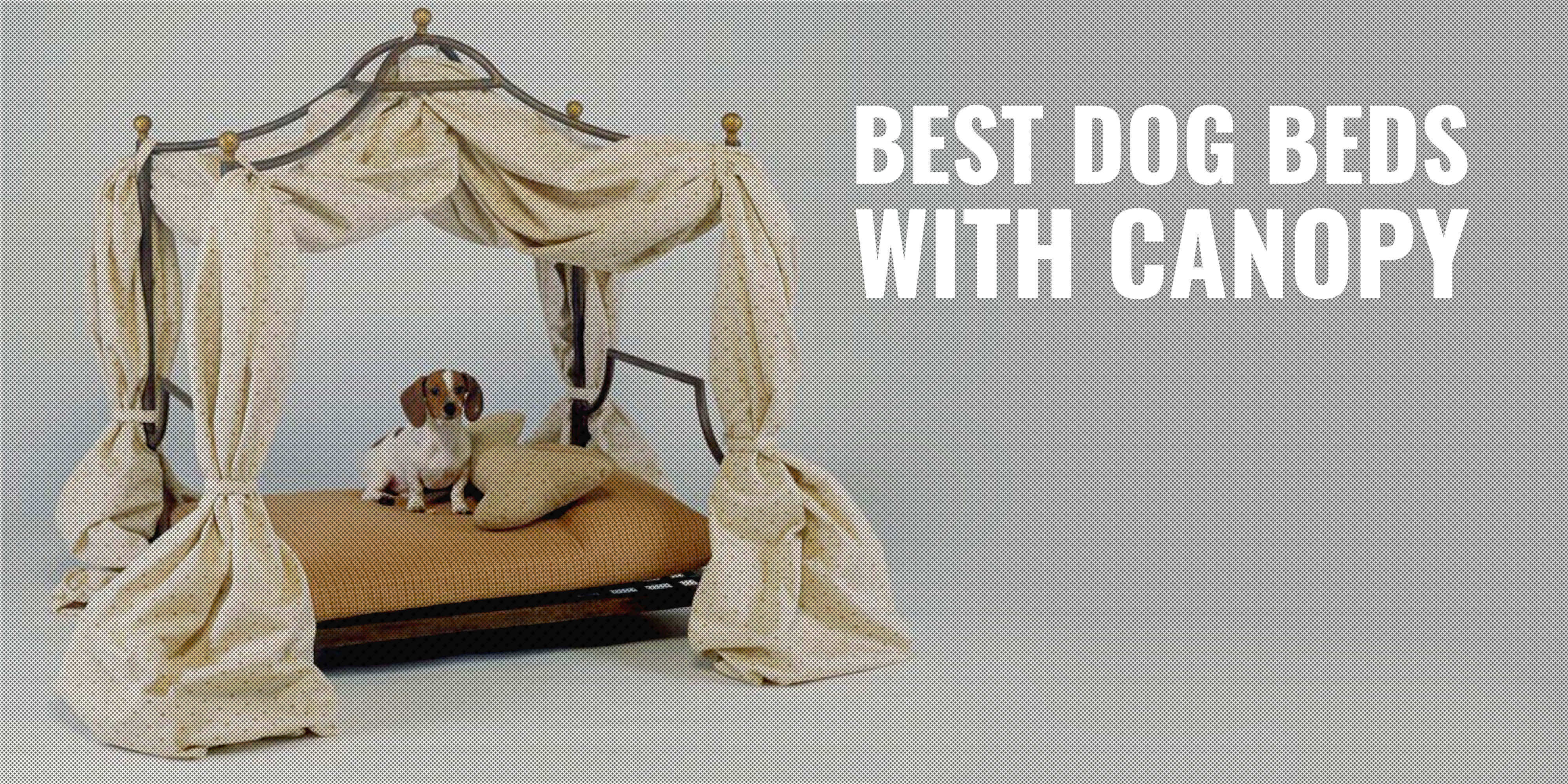 10 Best Dog Beds With Canopy Indoor Outdoor Elevated Faqs