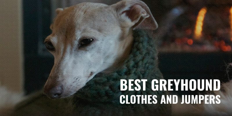best greyhound clothes and jumpers