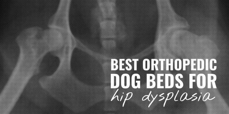 Best Orthopedic Dog Beds for Hip Dysplasia