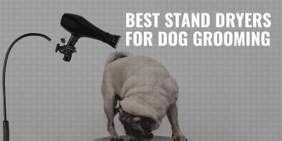 Best Stand Dryers for Dog Groomers