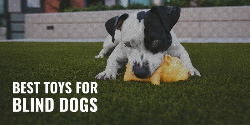 best toys for blind dogs