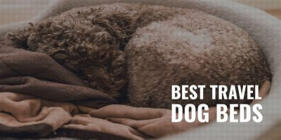 best travel dog beds