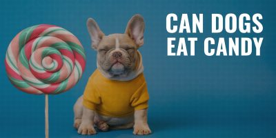Can Dogs Eat Candy?