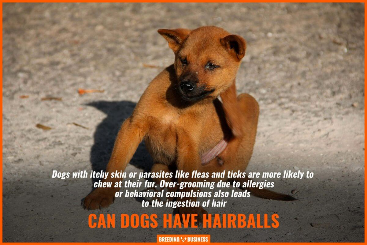 can dogs have hairballs