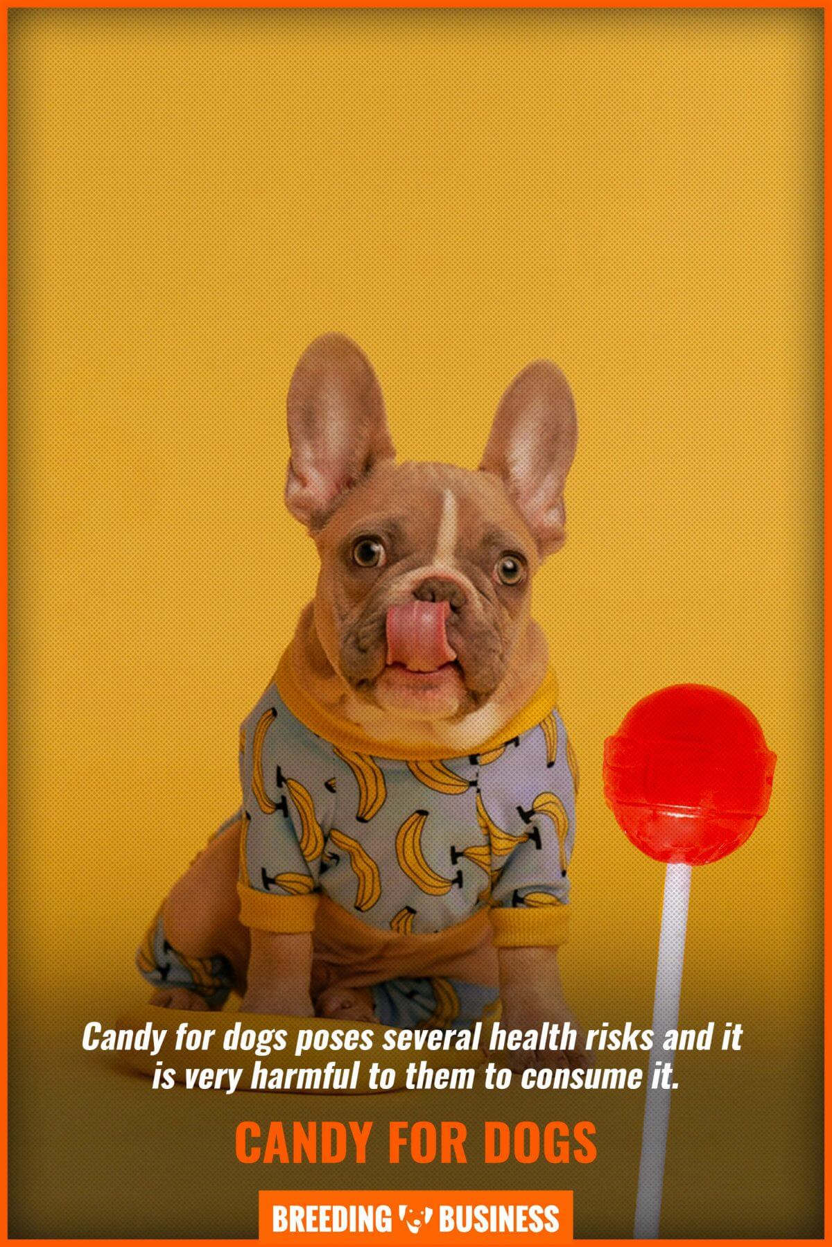 Can Dogs Eat Candy Safety
