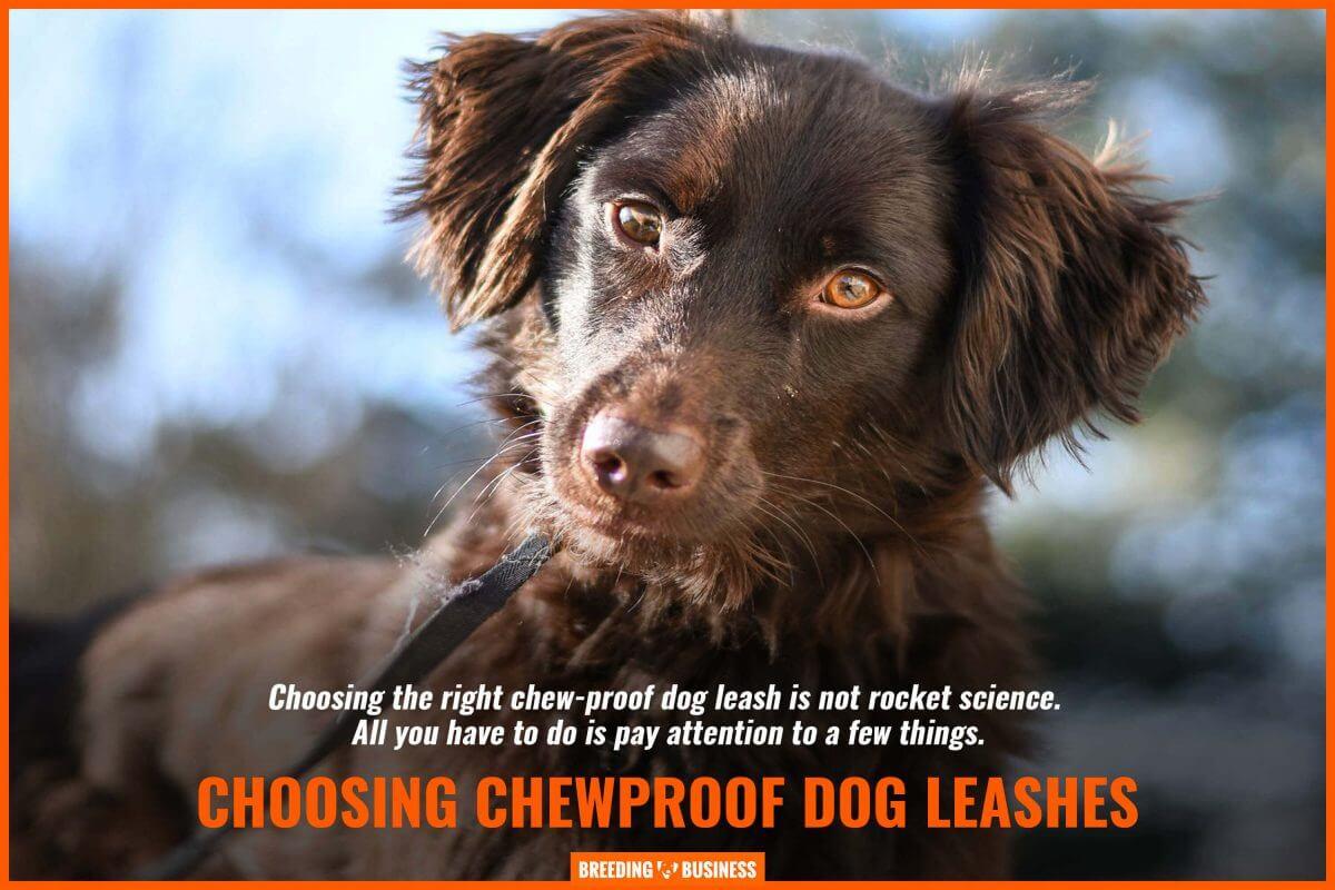 choosing best chewproof dog leash
