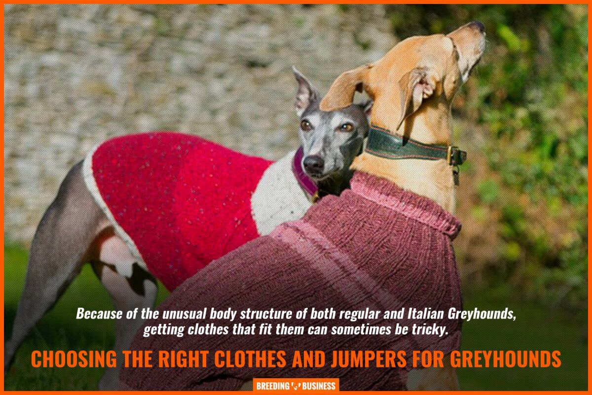 choosing clothes and jumpers for greyhounds