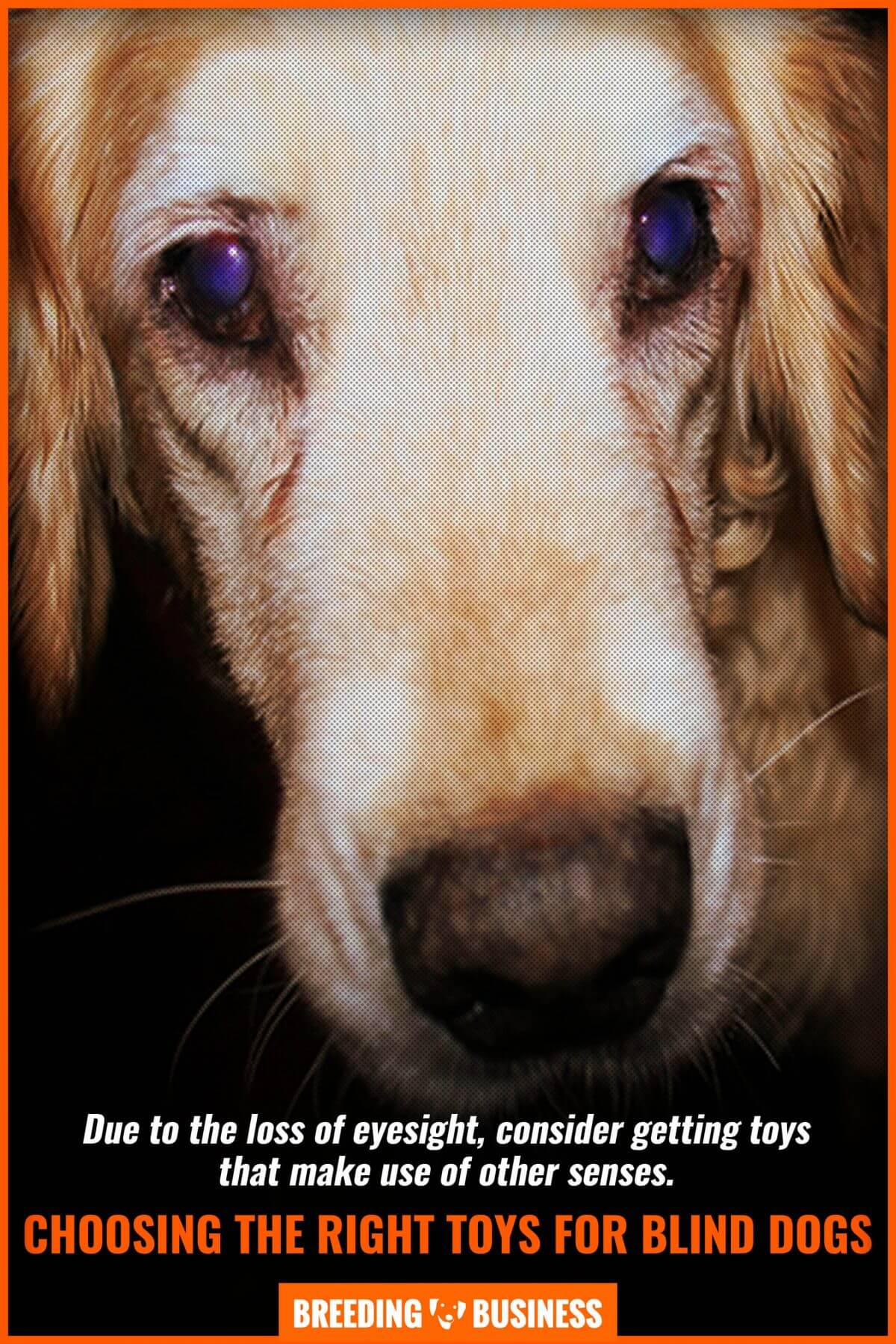 choosing toys for blind dogs
