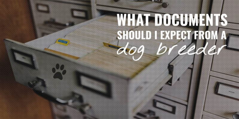 documents to expect from dog breeders