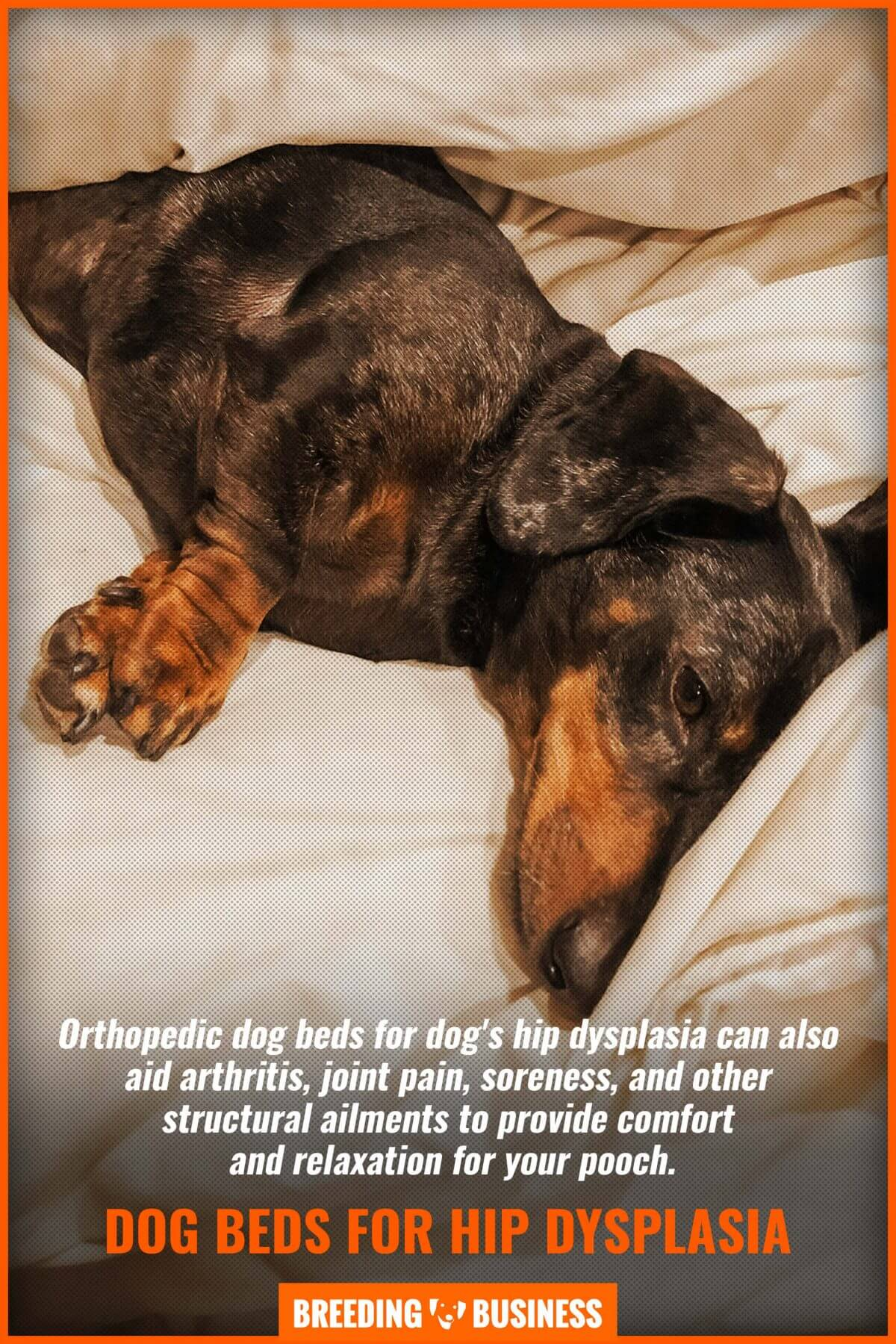 Orthopaedic dog beds help a lot with soreness.