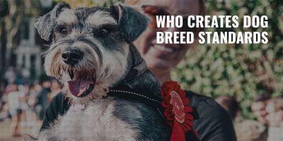 dog breed standards