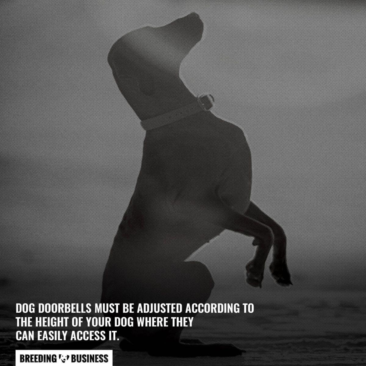 dog doorbell height