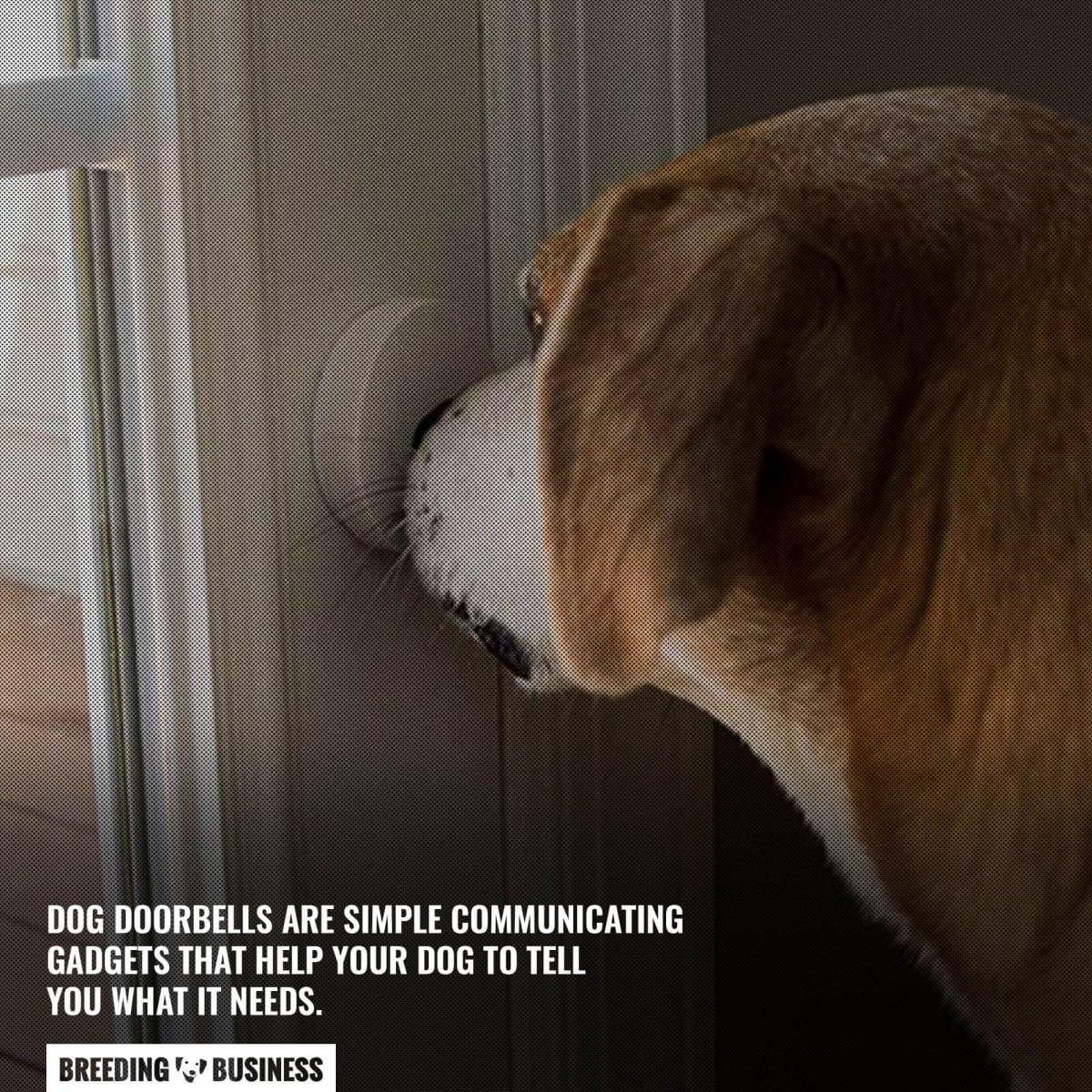 dog doorbells for communicating