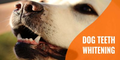 teeth whitening for dogs