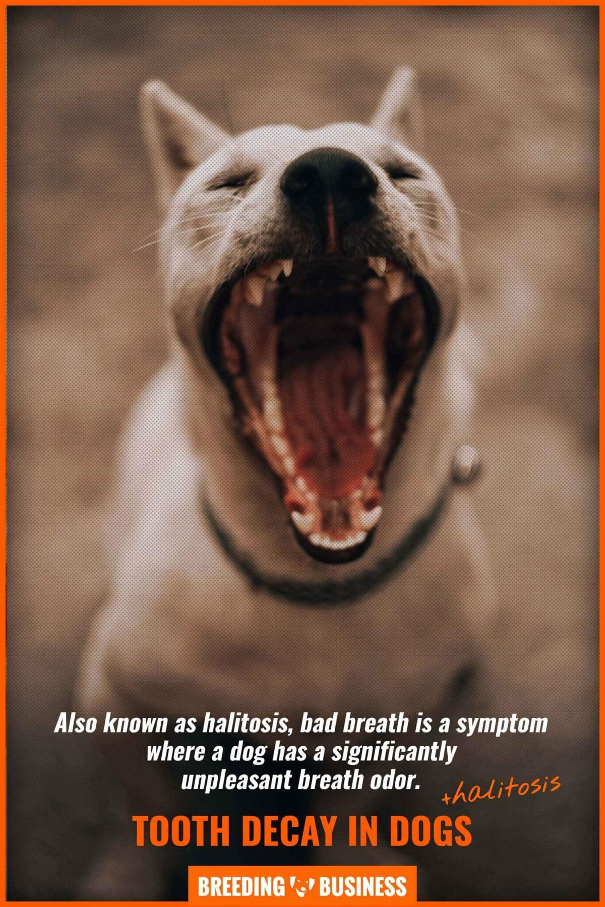 dog tooth decay and halitosis