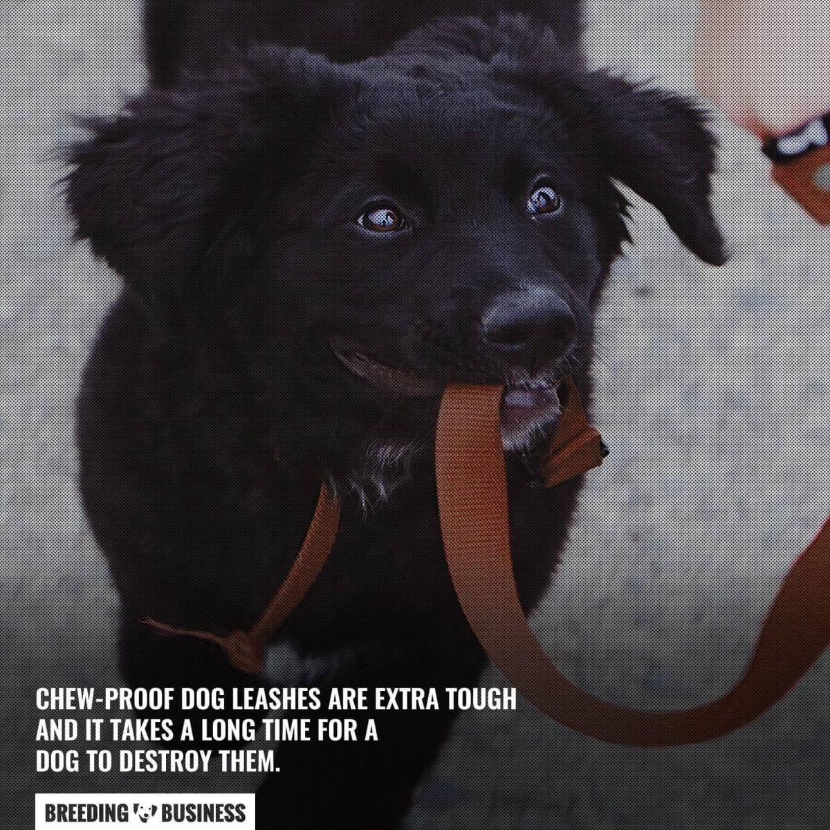 extra tough dog leashes