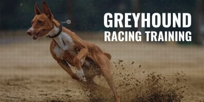 training racing greyhound dogs