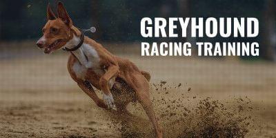Greyhound Racing Training – Conditioning, Nutrition & Methods