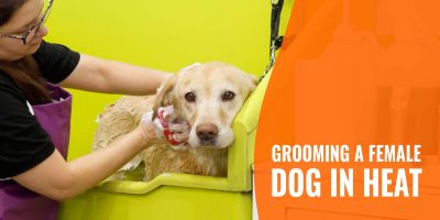 How To Groom a Female Dog in Heat