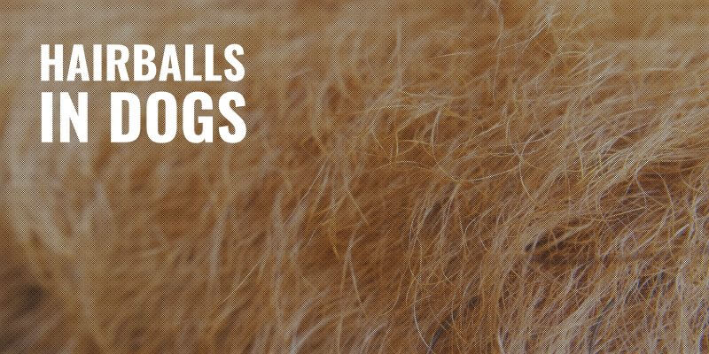 hairballs in dogs