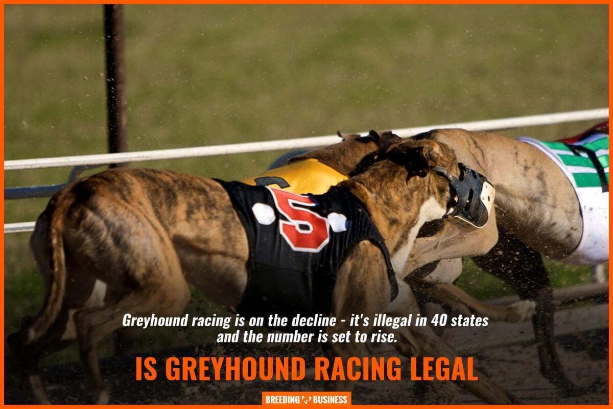 is greyhound racing legal