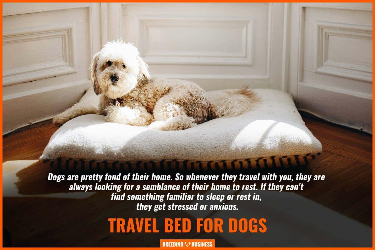 pet travel beds – designs