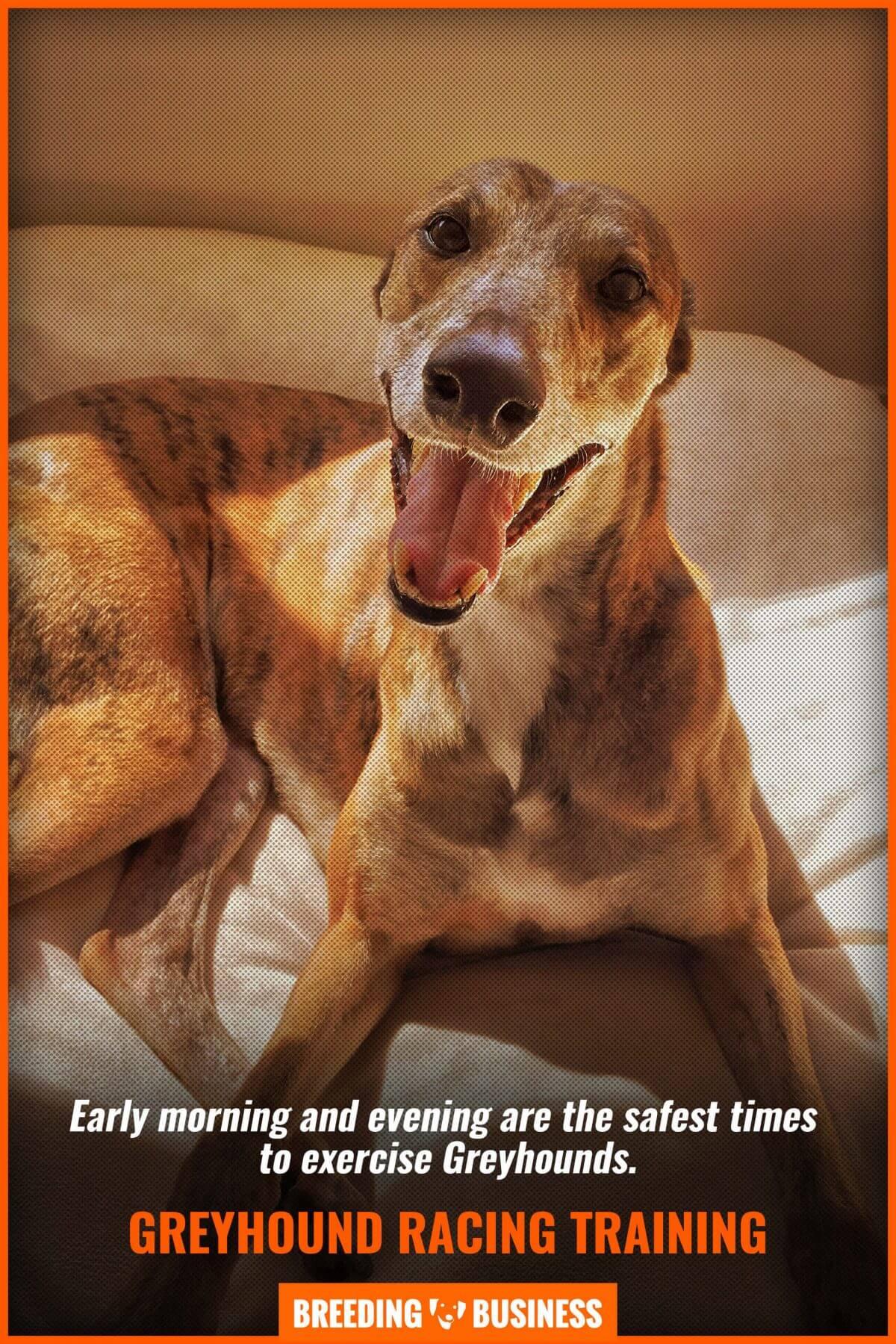 Are Greyhounds morning or evening dogs?