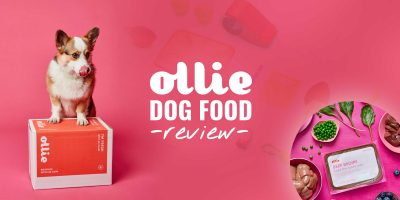 Ollie Dog Food Review