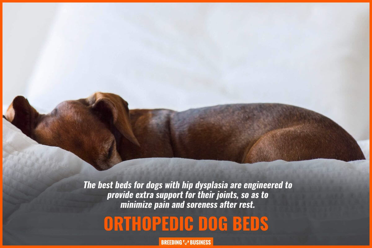Always favor orthopedic dog beds!