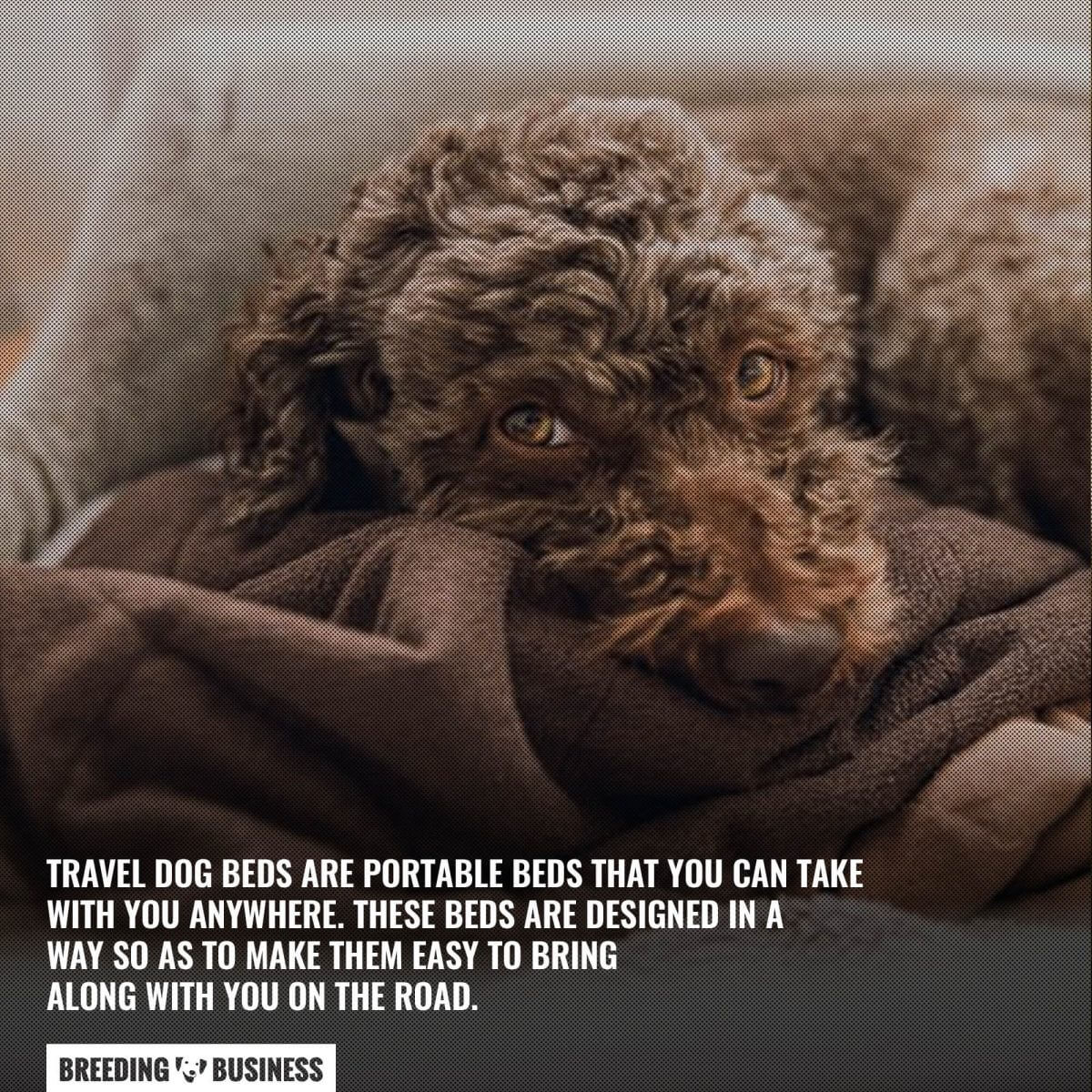 portability of travel dog beds