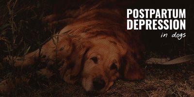 postpartum depression in dogs