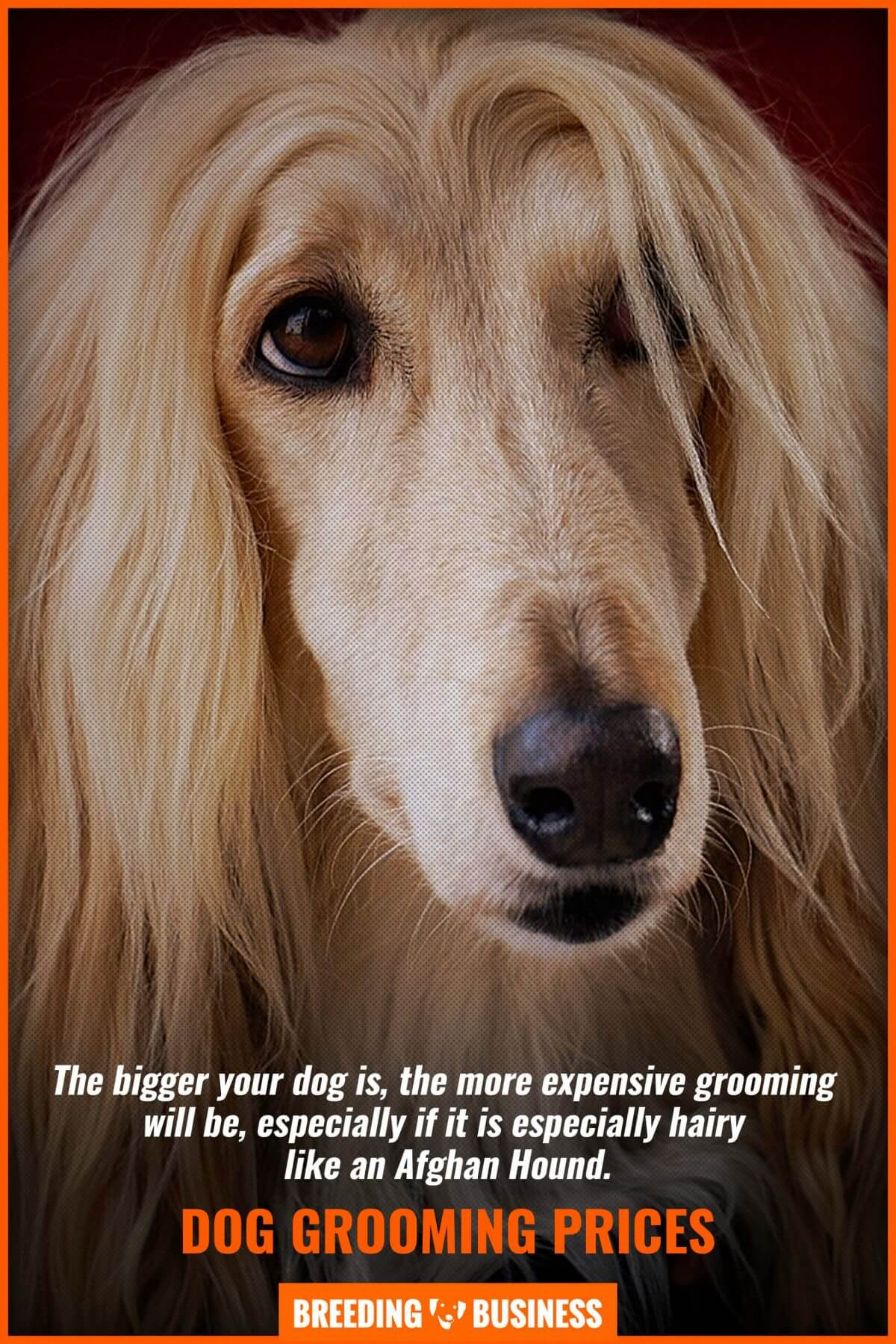 price of grooming for large dogs