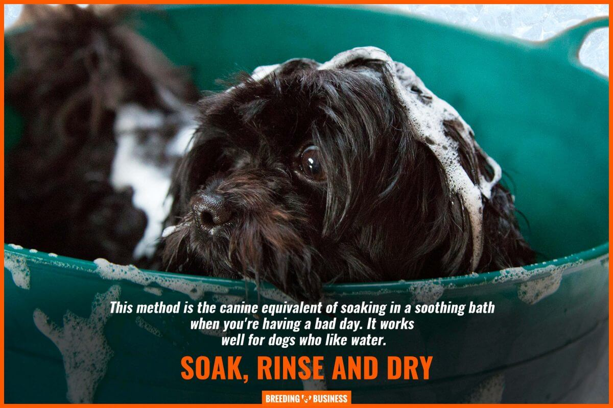 Soak, Rinse, and Dry the dog