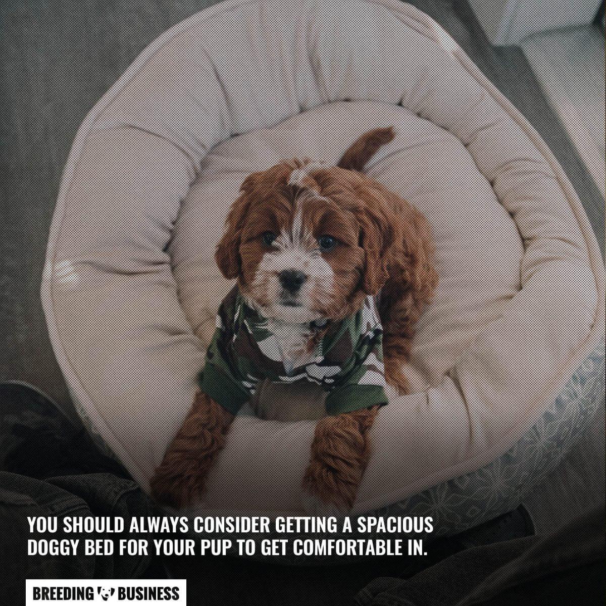 Spacious dog beds