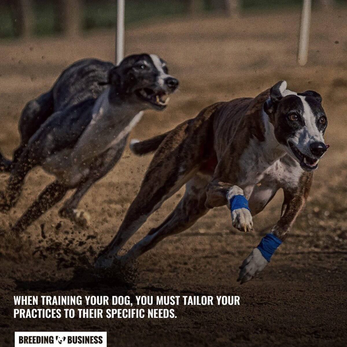 personalized training schedule for racing greyhounds