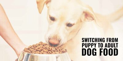 switching from puppy to adult dog food