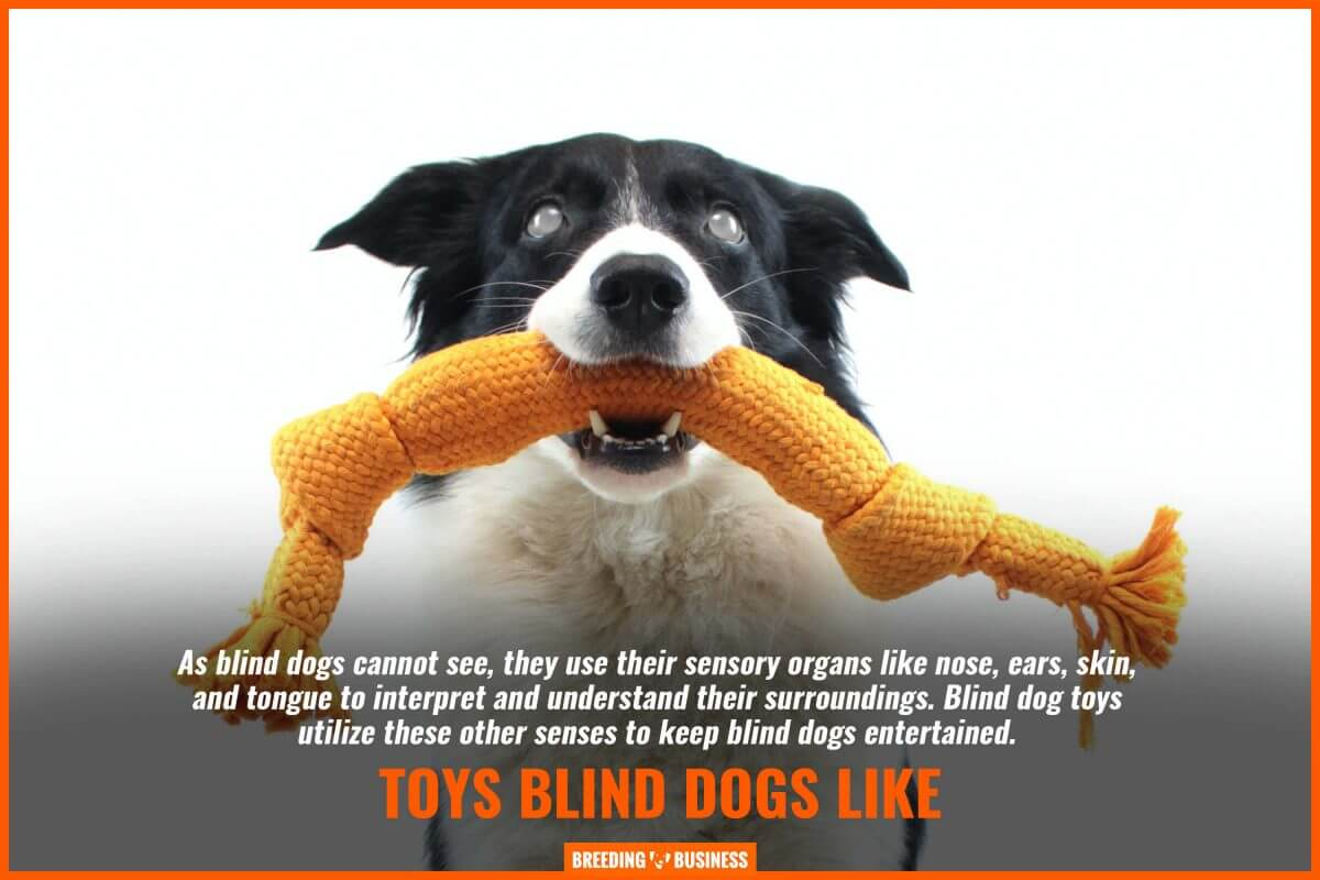 toys blind dogs like