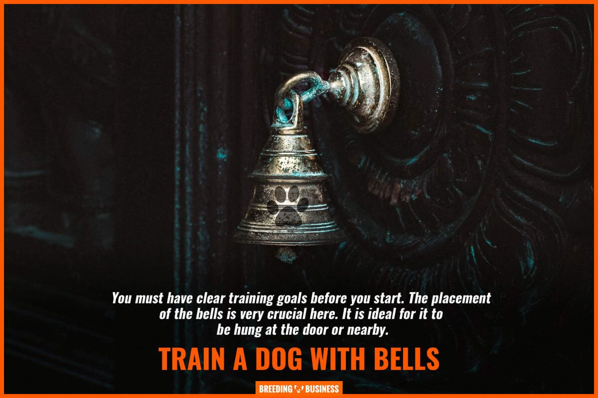 train a dog with bells