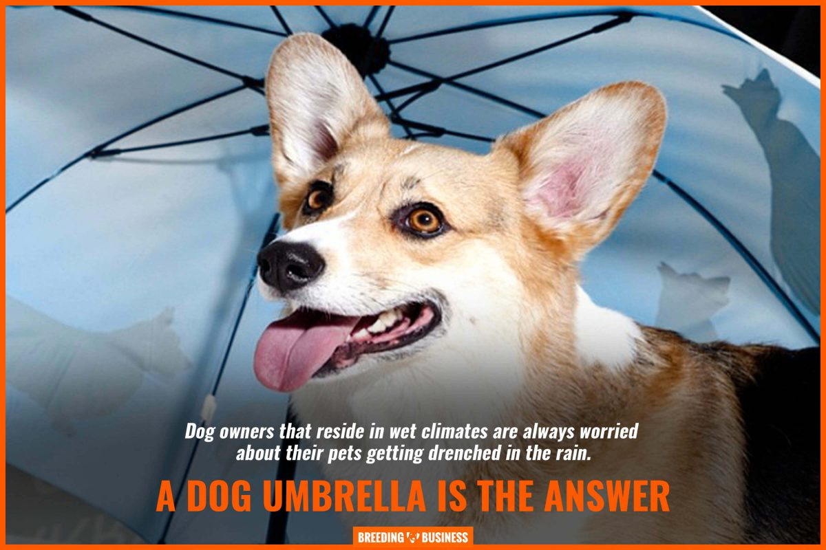 a dog umbrella is the answer