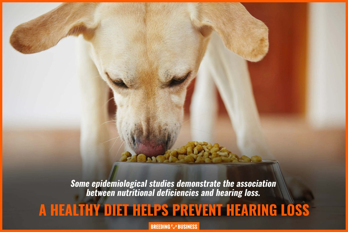 a healthy diet prevents hearing loss in dogs