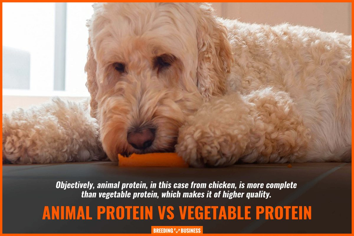 animal protein vs vegetable protein