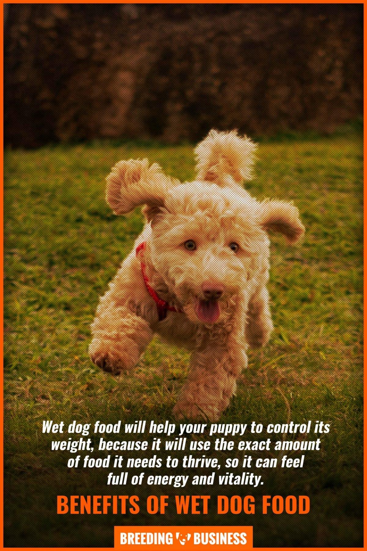 benefits of wet dog food