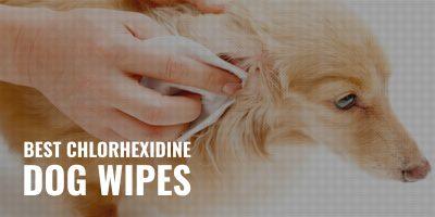 8 Best Chlorhexidine Dog Wipes – Safety, Efficacy, Brands & Reviews