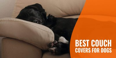 Best Couch Covers for Dogs – Reviews, Installation Guide & FAQs