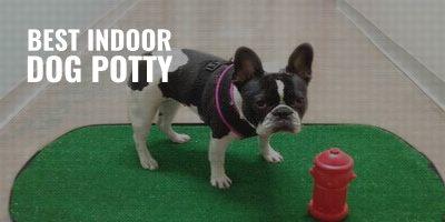 7 Best Indoor Dog Potties